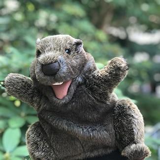 Groundhog-Sam.